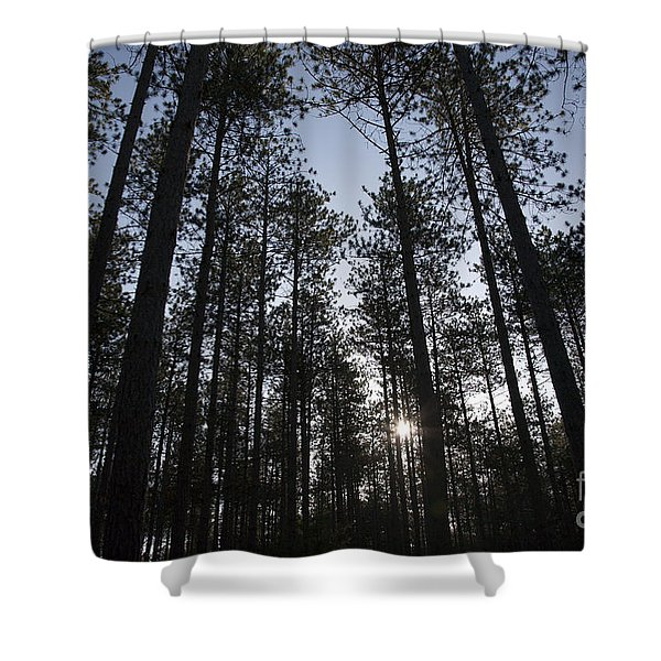 Shower Curtain featuring the photograph New England Red Pine Forest by Erin Paul Donovan