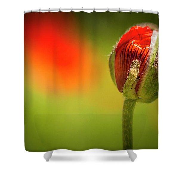 New Orange Poppy Bloom Shower Curtain