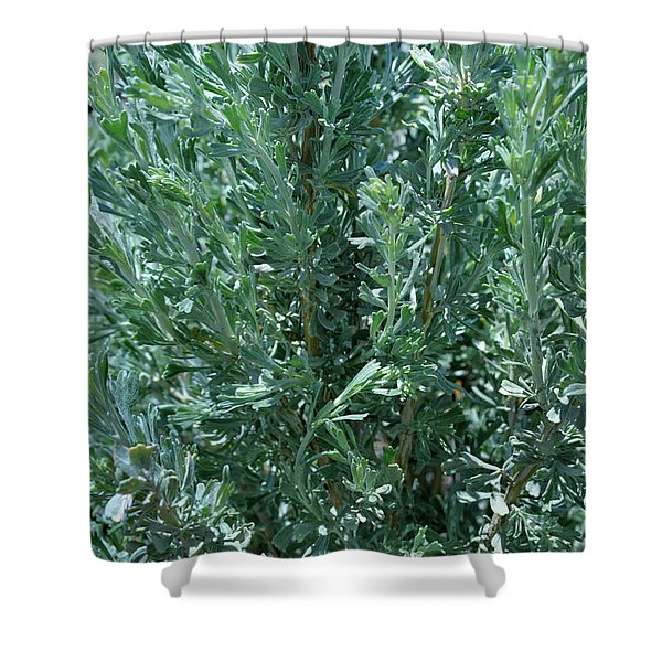 New Sage Shower Curtain