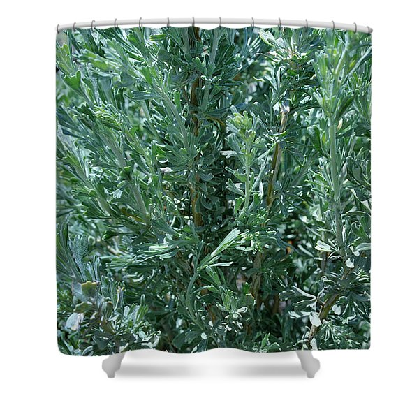 New Sage Shower Curtain
