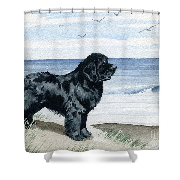 Newfoundland At The Beach Shower Curtain