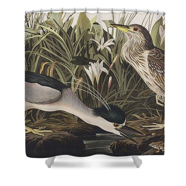 Night Heron Or Qua Bird Shower Curtain