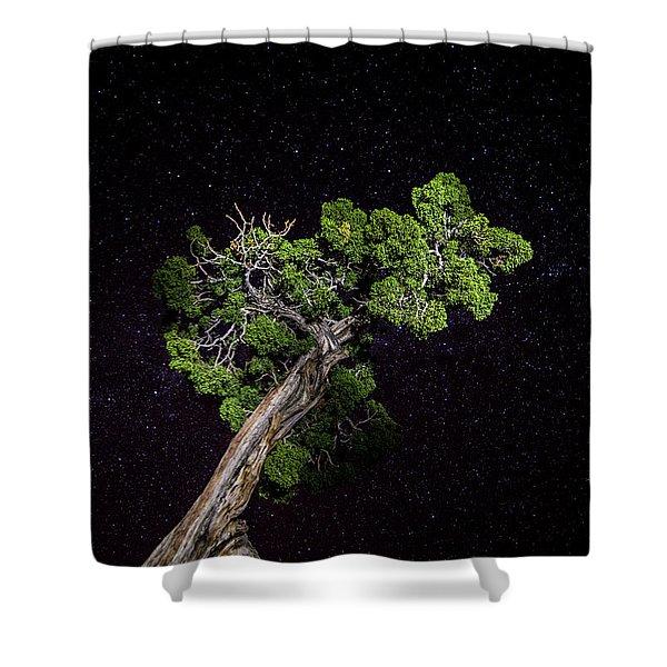 Night Tree Shower Curtain
