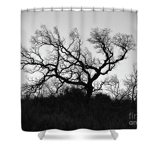 Nightmare Tree Shower Curtain