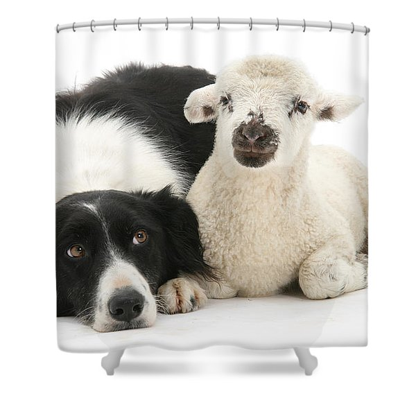 No Sheep Jokes, Please Shower Curtain