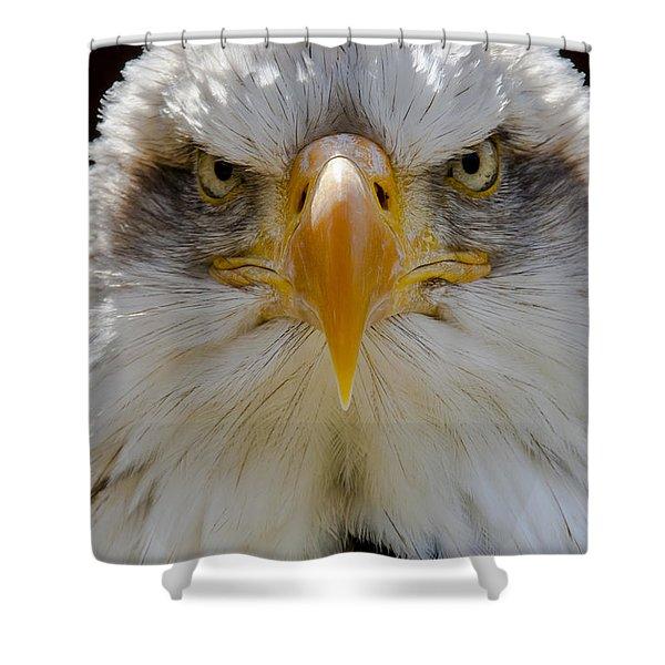 North American Bald Eagle  Shower Curtain