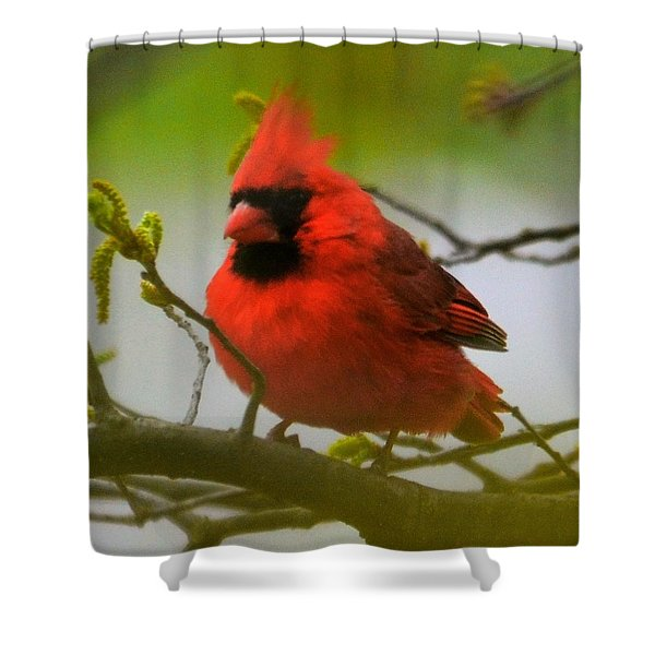 North Carolina Cardinal Shower Curtain