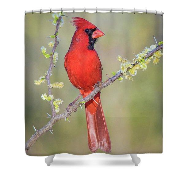 Northern Cardinal Cfh175894 Shower Curtain