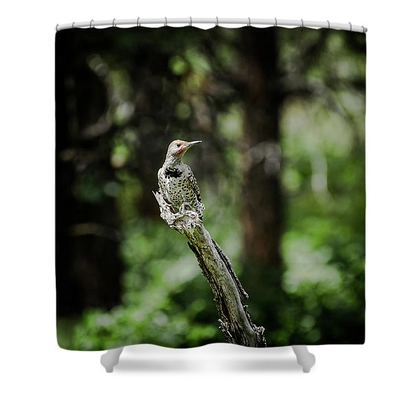 Northern Flicker Shower Curtain