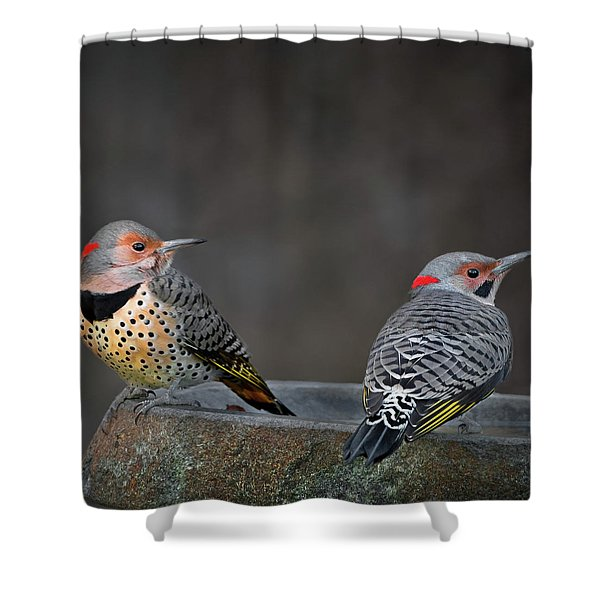 Northern Flickers Square Shower Curtain