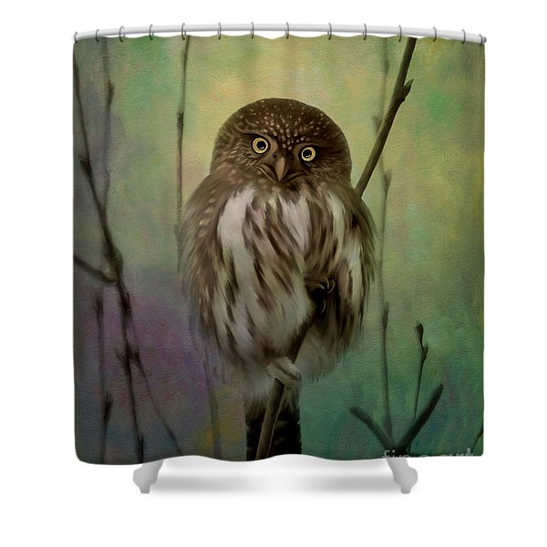 Northern Pygmy Owl  Shower Curtain