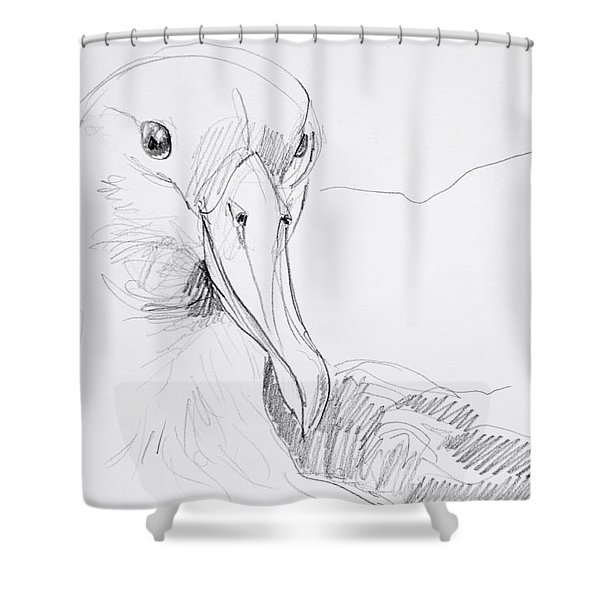Northern Royal Albatross Shower Curtain