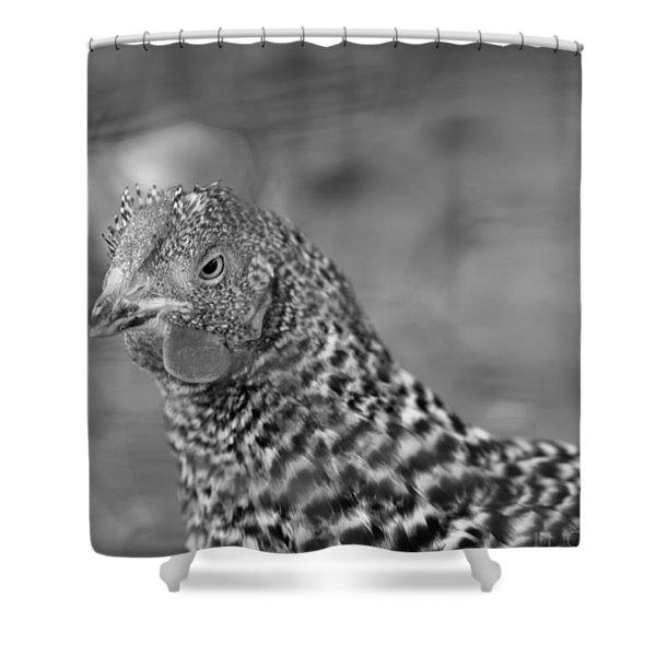 Not Your Chicken Dinner Shower Curtain