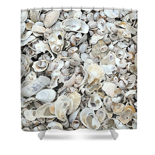 Nothing But Seashells Shower Curtain