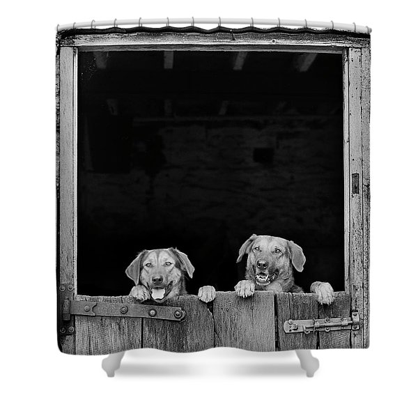Nz Huntaways, Forever Happy And Nosey. Working Sheep Dogs Shower Curtain