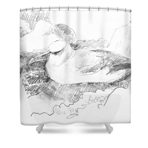 New Zealand White-capped Mollymawk Shower Curtain