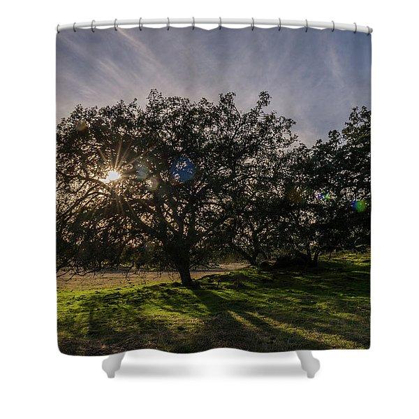 Oak Sunburst Shower Curtain