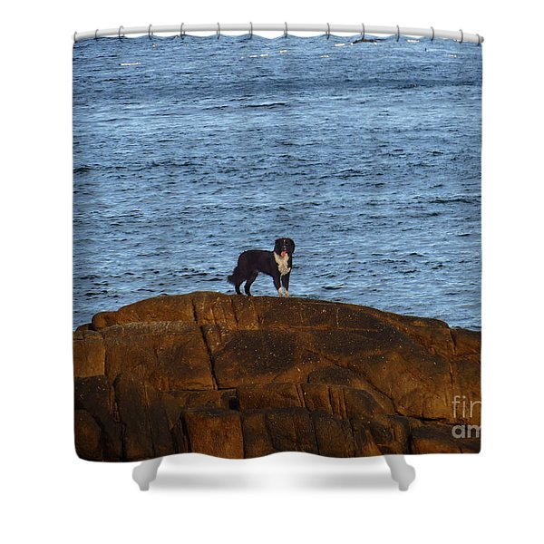 Ocean Dog Shower Curtain