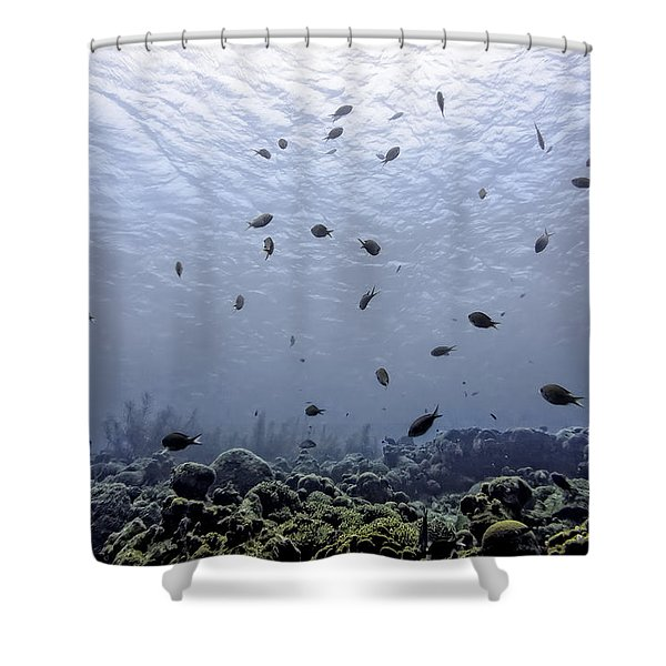 Shower Curtain featuring the photograph Ocean Light by Perla Copernik