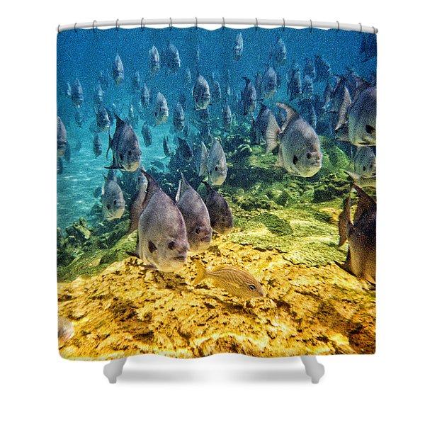 Oceans Below Shower Curtain
