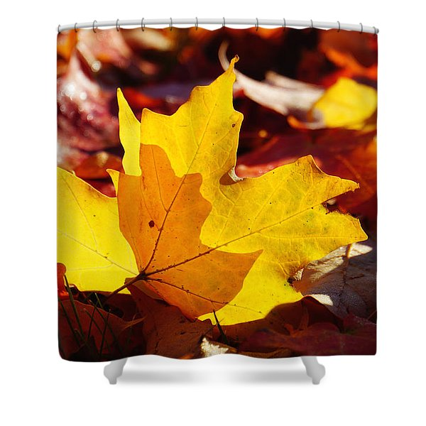 Of Light And Leaves Too Shower Curtain