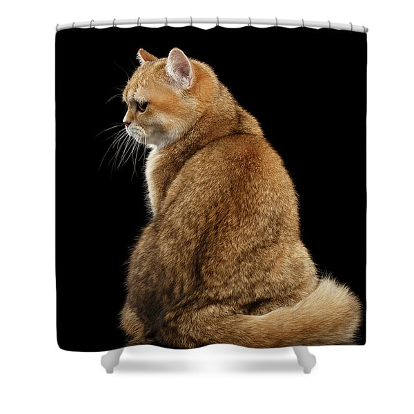 offended British cat Golden color Shower Curtain