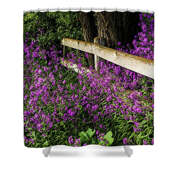 Old Fence And Purple Flowers Shower Curtain
