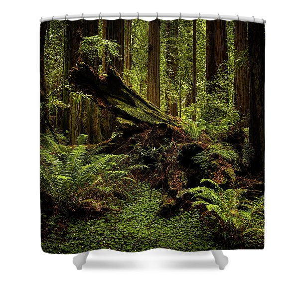 Old Growth Forest Shower Curtain