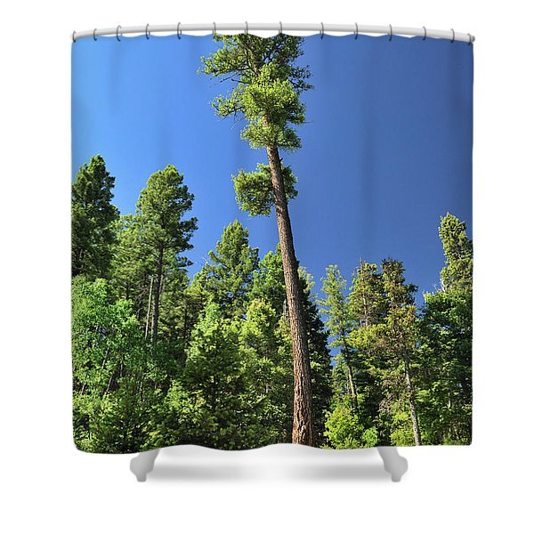 Old Ponderosa Shower Curtain