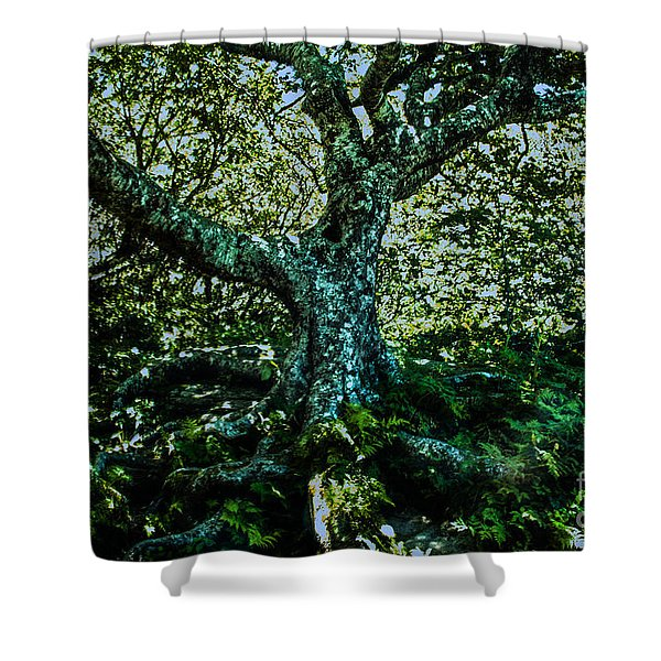 Old Tree As I Saw It Shower Curtain