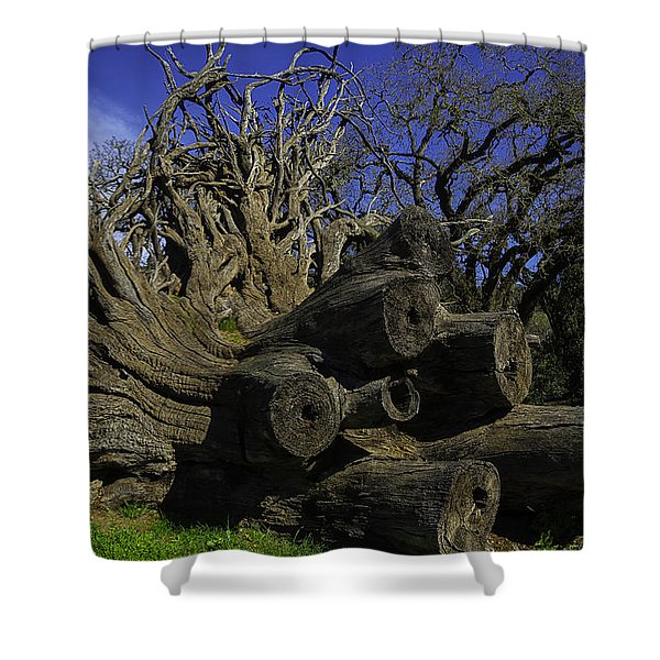 Old Tree Roots Shower Curtain