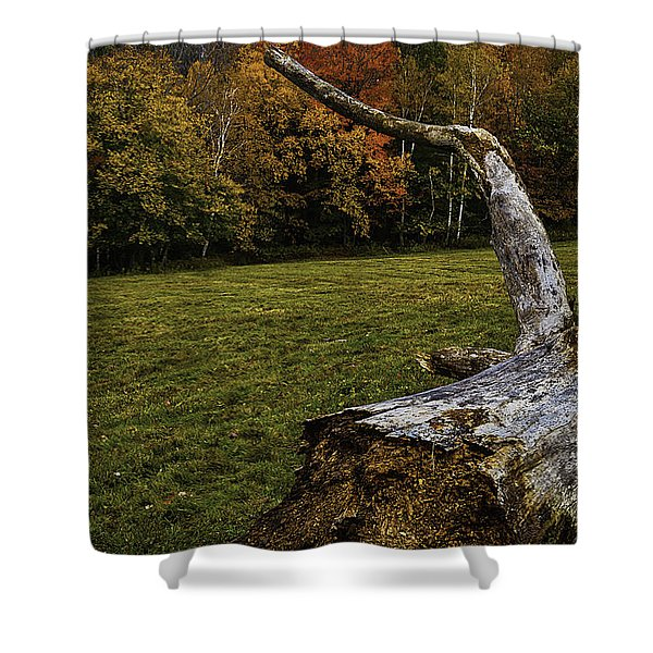 Old Tree Trunk Shower Curtain