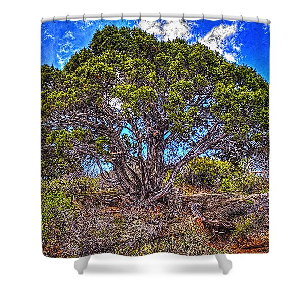 Old Utah Juniper Shower Curtain