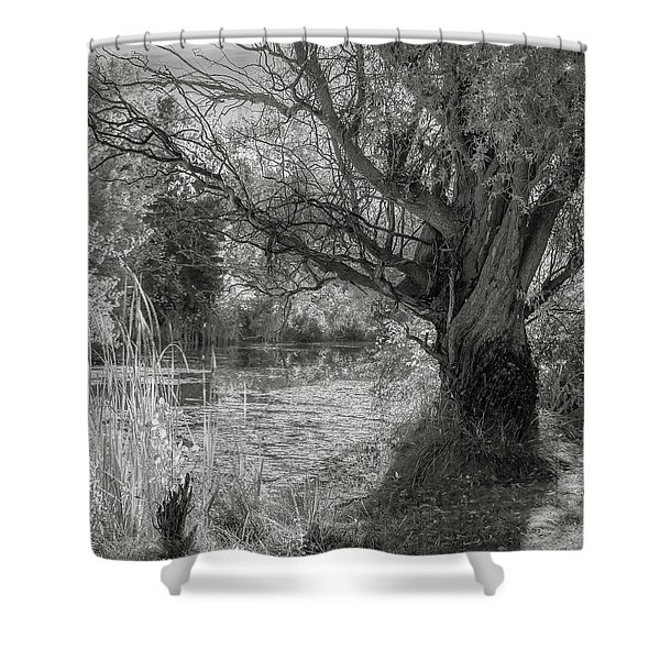 Old Willow Shower Curtain