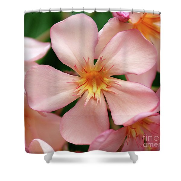 Oleander Dr. Ragioneri 1 Shower Curtain