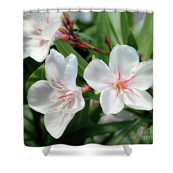 Oleander Harriet Newding 3 Shower Curtain