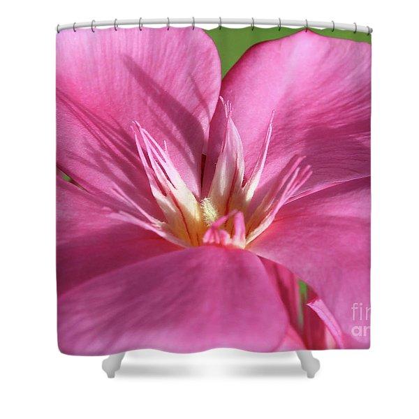 Oleander Maresciallo Graziani 3 Shower Curtain