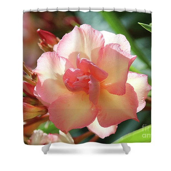 Oleander Mrs. Roeding 1 Shower Curtain