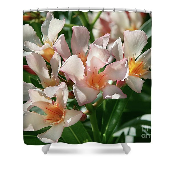 Oleander Petite Salmon 1 Shower Curtain