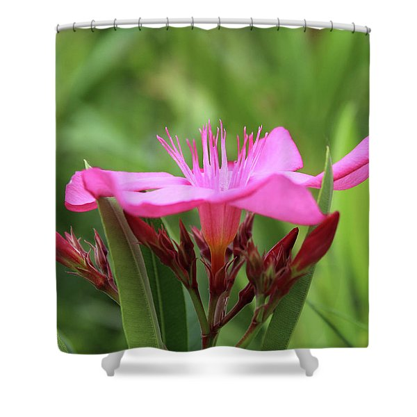 Oleander Professor Parlatore 1 Shower Curtain