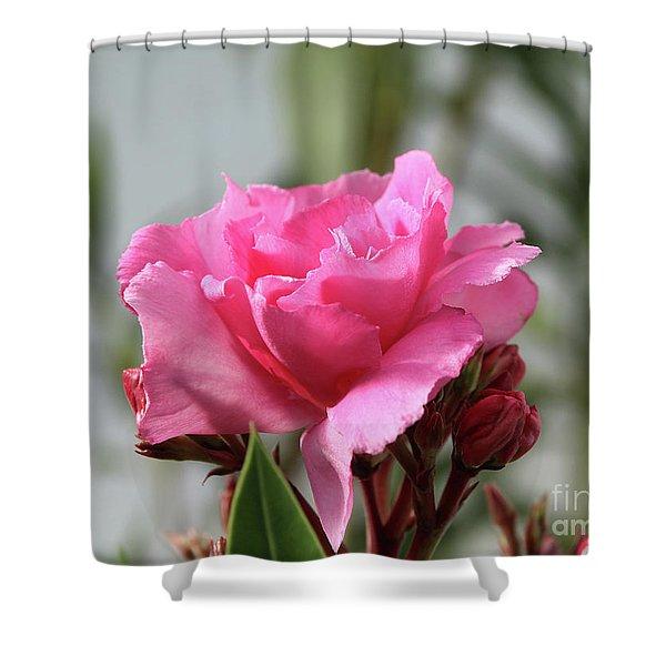 Oleander Splendens Giganteum 2 Shower Curtain