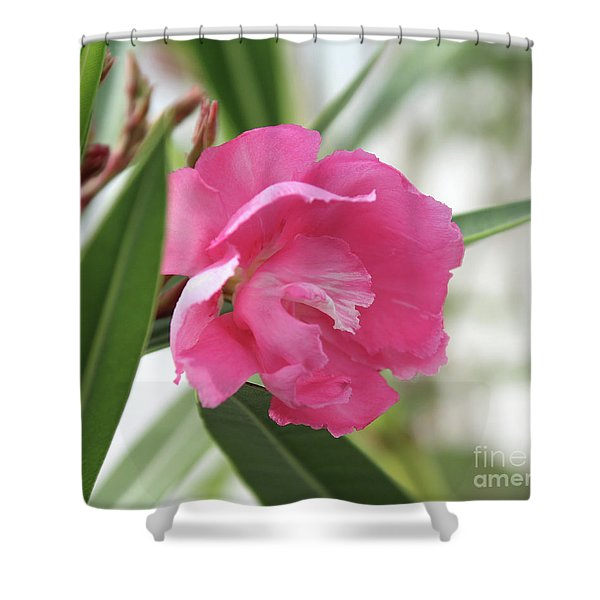 Oleander Splendens Giganteum 3 Shower Curtain