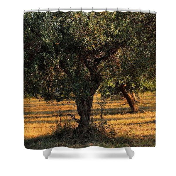 Olive Grove 3 Shower Curtain