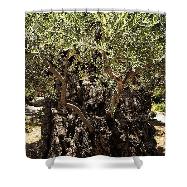Shower Curtain featuring the photograph Olive Tree by Mae Wertz
