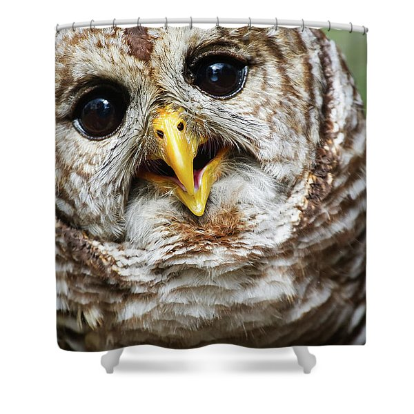 Oliver Owl Shower Curtain