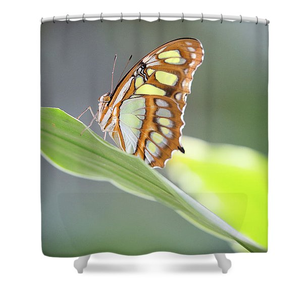 On A Leaf Shower Curtain