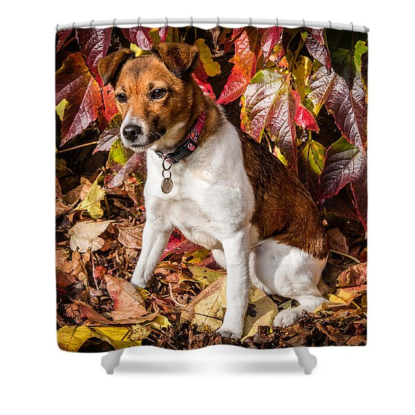 Shower Curtain featuring the photograph On The Leaves by Nick Bywater
