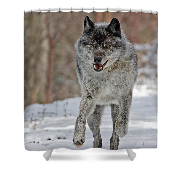 On The Run Shower Curtain