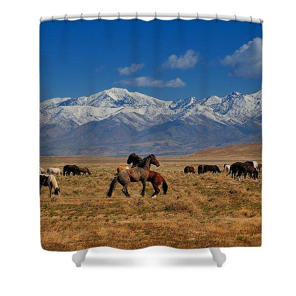 Onaqui Wild Horses Shower Curtain