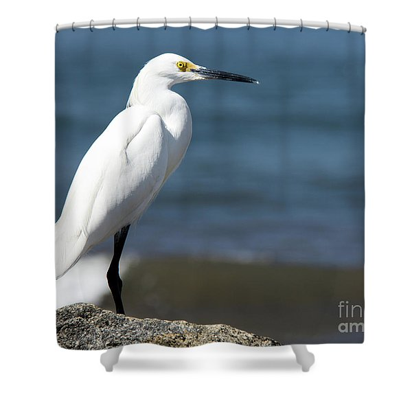 One Classy Chic Wildlife Art By Kaylyn Franks Shower Curtain
